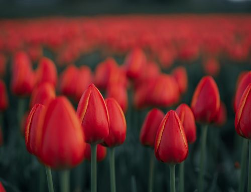 Videos from BC's Largest Tulip Festival