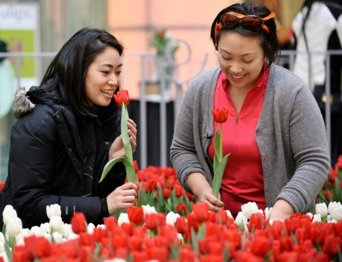 10,000 LIVE TULIPS BLOOM IN METROPOLIS AT METROTOWN, MARCH 7TH 2020