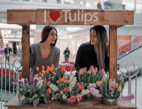 14,000 LIVE TULIPS BLOOM IN METROPOLIS AT METROTOWN, MARCH 7TH 2020